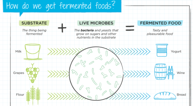 "INFOGRAPHICS: ""WHAT ARE, HOW WE GET AND WHY DO WE EAT FERMENTED FOODS"""