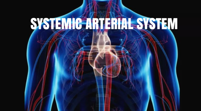 "BLOOD VESSELS: THE ""SYSTEMIC ARTERIAL SYSTEM"""