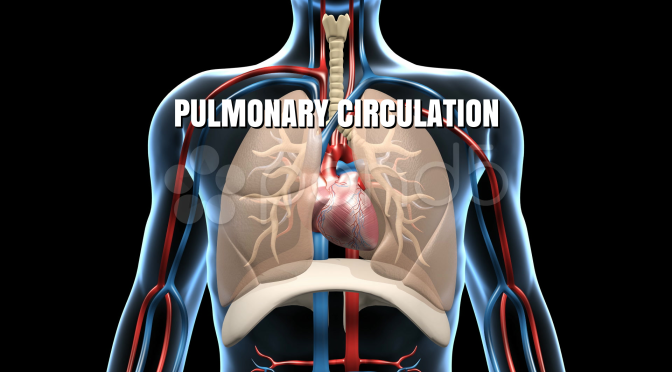 "BLOOD VESSELS: HUMAN ""PULMONARY CIRCULATION"""