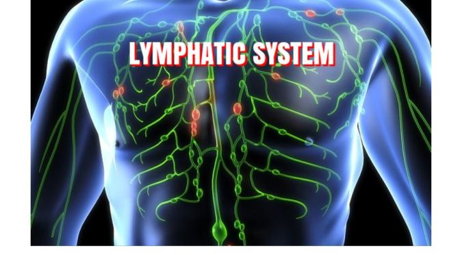 "BLOOD CIRCULATION: THE ""LYMPHATIC SYSTEM"""