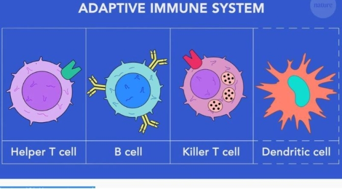 HEALTH VIDEOS: 'HOW VACCINES WORK WITH THE ADAPTIVE IMMUNE SYSTEM'
