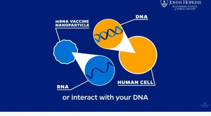 COVID-19: 'HOW MRNA VACCINES WORK' (VIDEO)