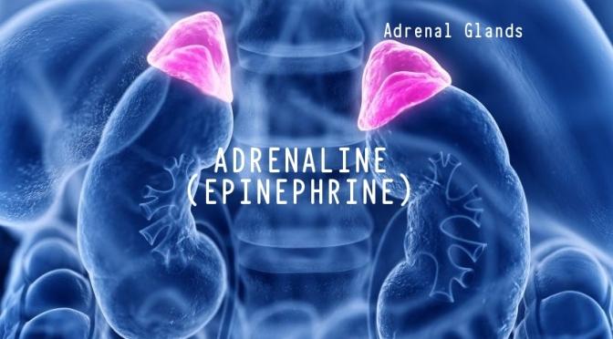 DR. C'S JOURNAL: STRESS & ADRENALINE (EPINEPHRINE)