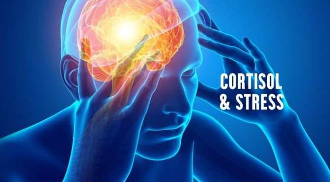 DR. C'S JOURNAL: Stress & The Effects Of Cortisol