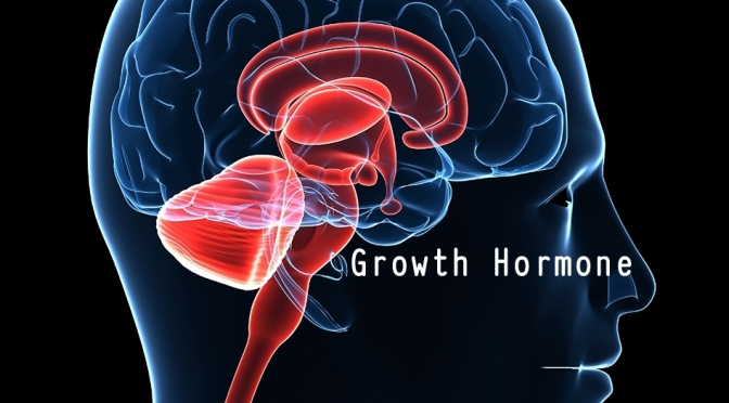 Dr. C's Journal: Effects Of Growth Hormone (GH)