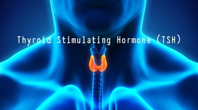DR. C'S JOURNAL: THYROID STIMULATING HORMONE