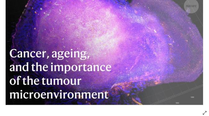 Cancer: Aging & Tumor Microenvironments